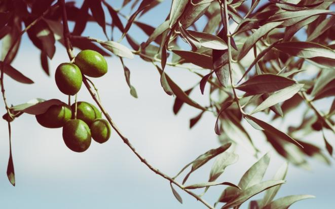 olives-945749