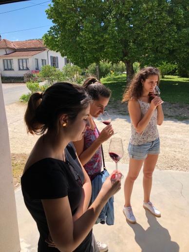 Balade pédestre dans les vignes et dégustation de vin